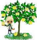 Free Pear Tree Royalty Free Stock Photos - 31703528