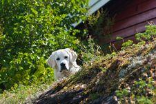 Free Oslo Islands Stock Photography - 31701392