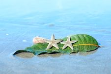 Free Starfishes , Sea Shell And Leaf On Wet Sand Stock Photography - 31704072