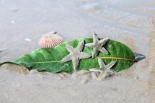 Starfishes  And Leaf On Wet  Sand Royalty Free Stock Photography