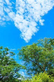Free Rainforest And Blue Sky Royalty Free Stock Photos - 31704628