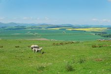 Free Looking North With Sheep Grazing, Northumberland Stock Image - 31710051