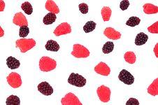 Free Raspberry, Blackberry Stock Photos - 31711043