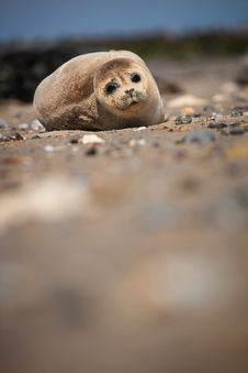 Free Seal Stock Photo - 31714520