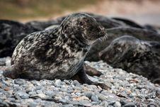 Free Seal Stock Photo - 31714880