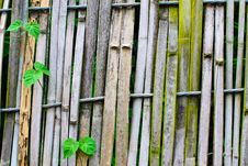 Free Old Bamboo Fence Royalty Free Stock Photos - 31717608