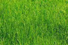 Free Green Grass Background Stock Image - 31719691