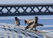 Free Birds01 Stock Photography - 31722662