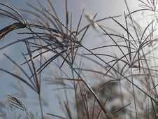 Free Rhodes Grass Windy Background Royalty Free Stock Images - 31737479