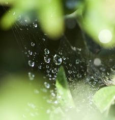 Free Spider Web With Dew Drops Royalty Free Stock Photography - 31738287