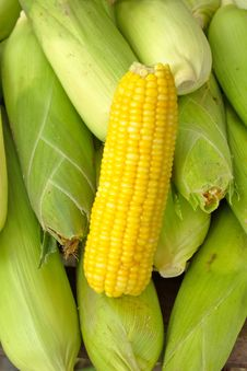 Free Corn. Stock Photos - 31741353