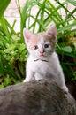 Free Kitten Climbed Up The Tree Stock Image - 31750111