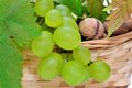 Free Basket Of Grapes And Nuts Stock Photos - 31750503