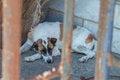 Free Stray Dog Stock Photography - 31759752