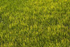 Free Green Grass Stock Image - 31750361