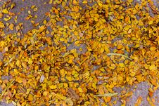 Dry Yellow Leave On The Ground Stock Images