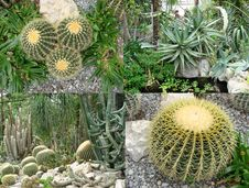 Free Flowers Cacti Orangery Stock Photos - 31755923