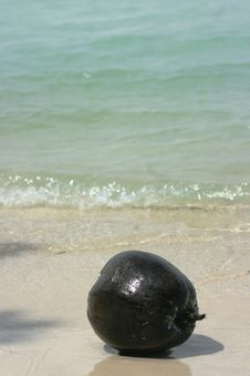 Free Old Coconut Washed Up Stock Images - 31755994