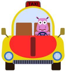 Free Animal Cab Stock Photo - 31756200