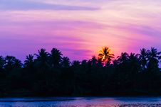 Free Sunset At Coconut Tree Along The River Royalty Free Stock Image - 31758906