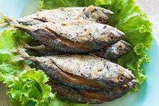 Free Thai Local Fried Mackerel Fish Stock Image - 31758921