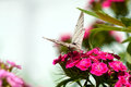 Free The Butterfly Sits On Flowers Stock Image - 31766561