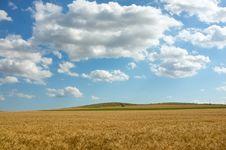 Free Wheat  Field Stock Photos - 31760503