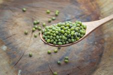 Free Mung Beans Stock Images - 31765094