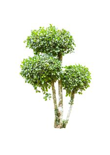 Free Tree Stock Images - 31771624