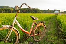 Free Old Bicycle With Paddy Field Background Stock Image - 31772401
