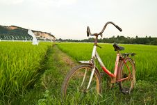 Free Old Bicycle With Paddy Field Background Royalty Free Stock Photos - 31772428