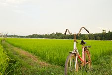 Free Old Bicycle With Paddy Field Background Royalty Free Stock Images - 31772449