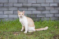 Free Cat Stock Image - 31776251