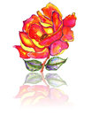 Free Rose And Leaves With Reflection Watercolor Stock Photos - 31783063