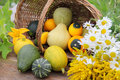 Free Still Life With Assorted Gourds Royalty Free Stock Photography - 31786637
