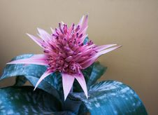 Free Decorative Flower Room Stock Photo - 31785200
