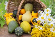 Still Life With Assorted Gourds Royalty Free Stock Photography