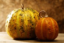Pumpkin Still Life Stock Image
