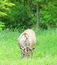 Free Donkey Stock Photography - 31797962
