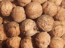 Free Background Of Nuts Under A Net Stock Image - 31793381