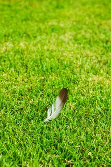 Free Feather On Grass Royalty Free Stock Image - 31794216