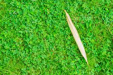 Free Dry Leaf On Grass Stock Photos - 31794393
