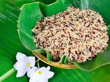 Free Mixed Of High Nutrient Organic Rice Stock Photography - 31797182