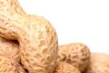 Roasted In-shell Peanuts Close-up. Royalty Free Stock Photo