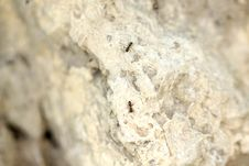 Free Ants On The Rock, Macro View Stock Images - 31798154