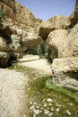Free Desert Oasis Stock Photography - 3182732