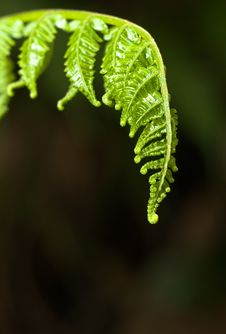Free Tender Young Fern Stock Photos - 3181113