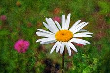 Free Textured Daisy Stock Images - 3181624