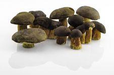 Free Mushrooms Royalty Free Stock Photo - 3181745