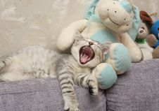 Free The Grey Kitten Yawns Laying A Royalty Free Stock Images - 3182359